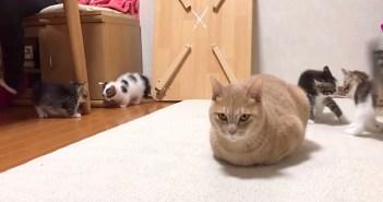 動じない猫