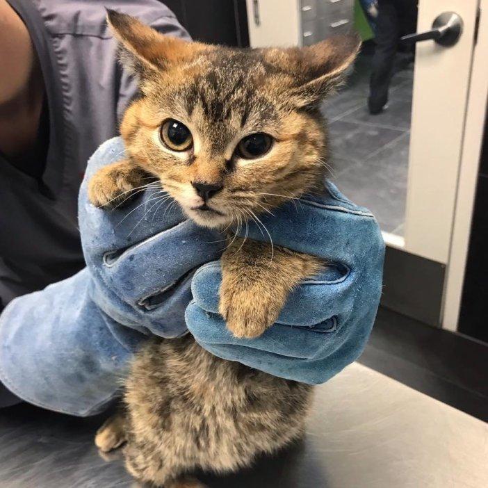 持たれる猫
