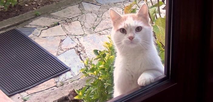 外から見つめてくる猫