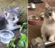 人生を変える子猫との出会い