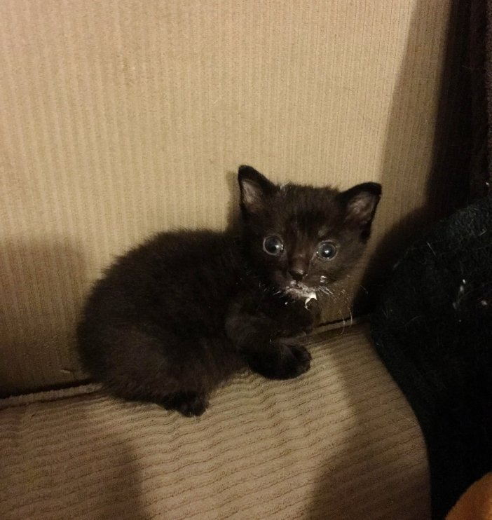 ミルク子猫