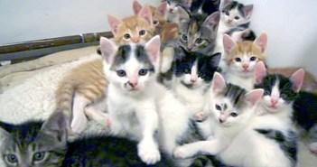 子猫達がいっぱい