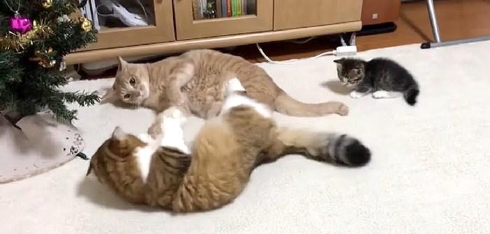 ケンカの仲裁をする子猫