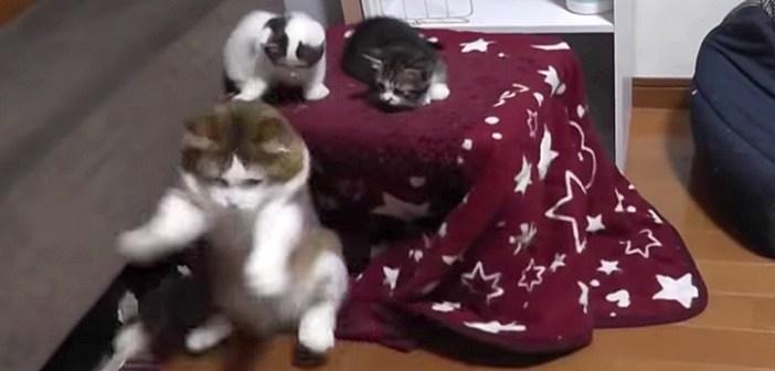 子猫達を仲裁する父猫