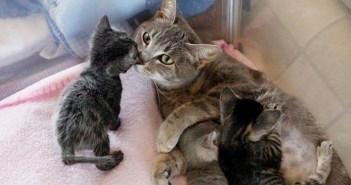 後ろ足が動かなくなり、死の淵を彷徨っていた母猫。お腹の赤ちゃん達への深い愛情が、母猫の命を繫ぎ止める