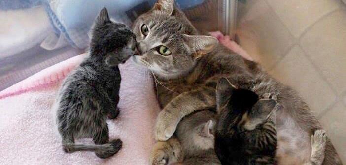 愛情深い母猫