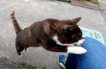 膝に飛び乗る猫