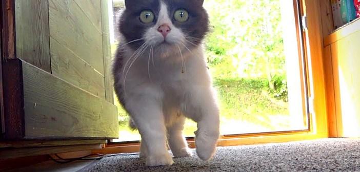 毎日訪ねてくる猫