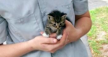 手の中に収まった子猫