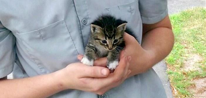 「いっしょに暮そう!」物陰から現れた小さな子猫が、手の中に収まってきた♪ そのまま家族に迎えると幸せいっぱいに♡