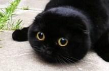 まん丸な猫さん