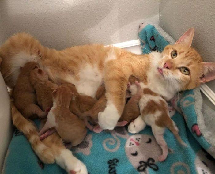 寄り添う猫の親子