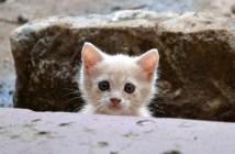 どこまでも付いて来た子猫