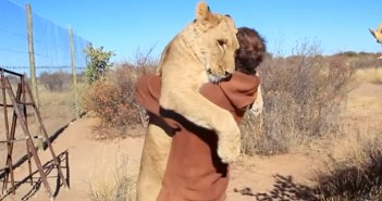 ライオンと男性