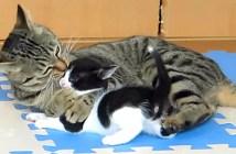 孫猫が大好きなおばあちゃん猫