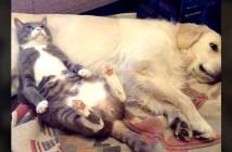 犬を枕にする猫