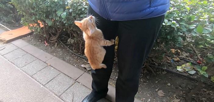 登って来る子猫