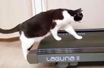 ルームランナーと猫