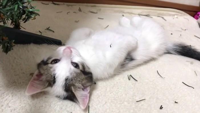 目覚めた子猫