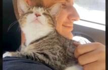 ハグする猫と男性