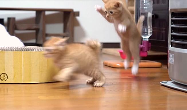 遊びまわる子猫達