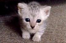 玄関の外にいた子猫