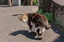 フレンドリーな猫