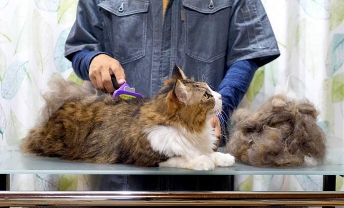 毛づくろいされる猫