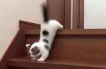 階段と子猫
