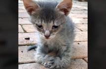 前足が曲がった子猫