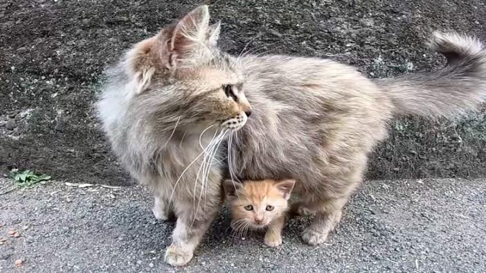 母猫に守られる子猫