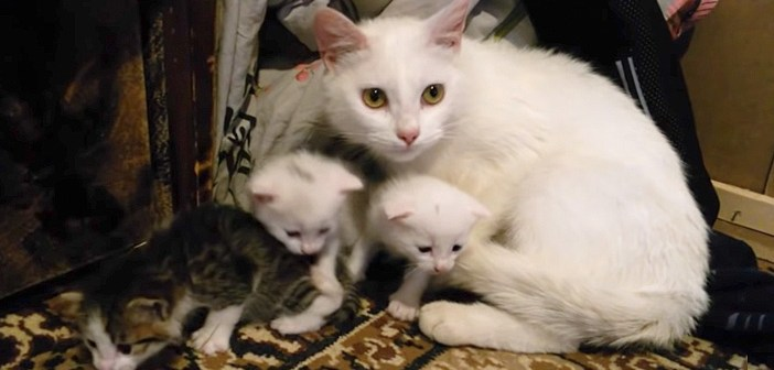 引っ越してきた猫の親子