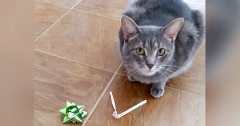 プレゼントを置く猫
