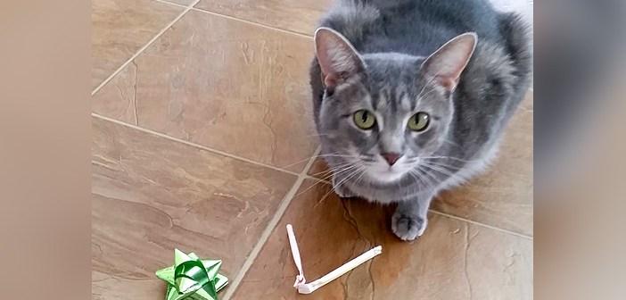 毎朝、同じ場所に色々なプレゼントを置き始めた猫さん。それは自分を助けてくれた家族への感謝の気持ちでした (*´ω`*)