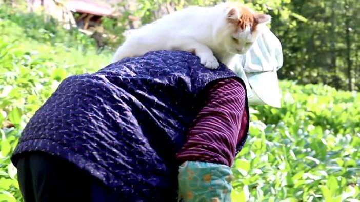 背中に乗る猫