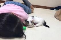 添い寝する子猫
