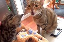 会話する猫の親子