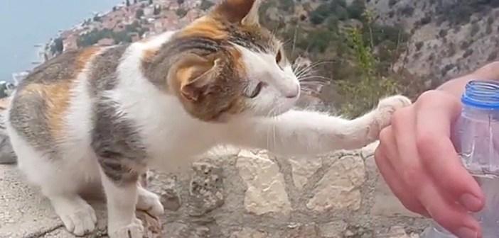 水をおねだりする猫