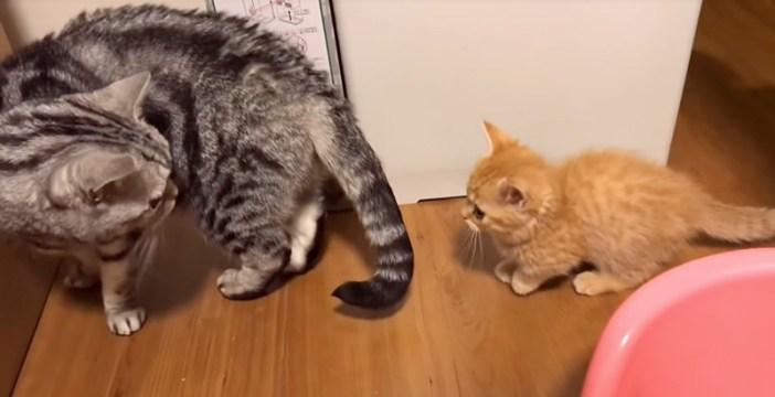 付いて来る子猫