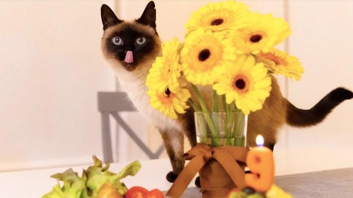 誕生日を迎えた猫