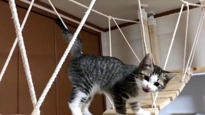 鳴いてくる子猫