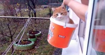 帰宅する猫