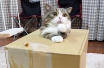 箱から出られない猫