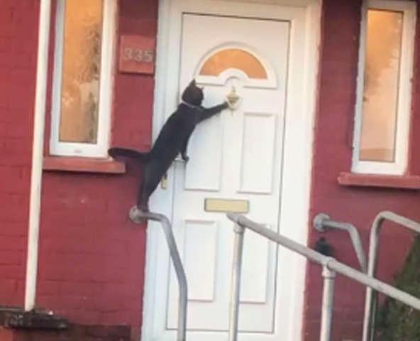 ドアをノックする猫