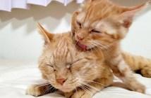 猫の親子の毛づくろい
