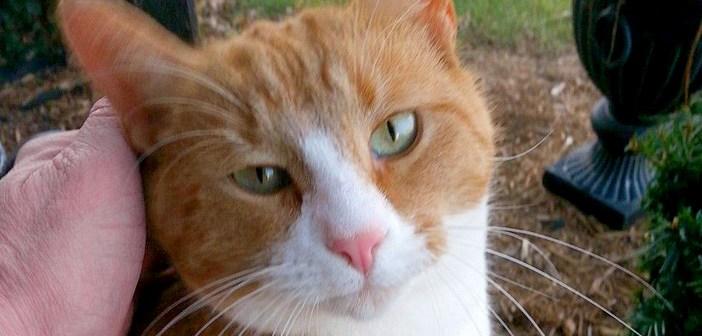 人間をとても警戒していた野良猫に、家の近くで出会った夫婦。世話を始めて4年後に、嬉しいサプライズが待っていた!