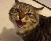 飼い主さんの帰りを今か今かと心待ちにしていた猫さん。飼い主さんが帰宅すると、一生懸命に話しかけてきた (〃∇〃)!