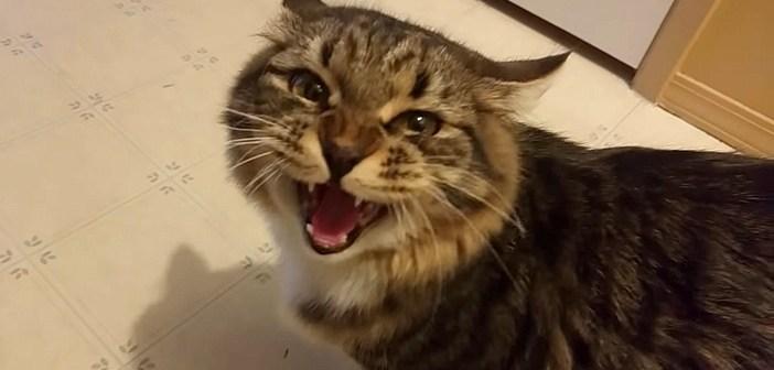 話しかける猫さん