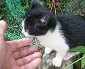 裏山から迷子の子猫が出てきてビックリ! 鳴き続ける子猫に手を差し伸べると、愛らしい姿で擦り寄ってきた (*´ェ`*)