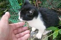 裏山から現れた子猫
